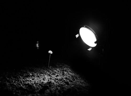 <i>Bloom</i>,       2012<br />      Super16 scan 2k,        Video Black & White, 5 min.<br />