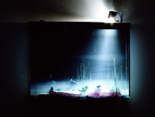 »Présage, tranche«, 2013<br />chemical landscapes, slowly developping in a glass tank<br />