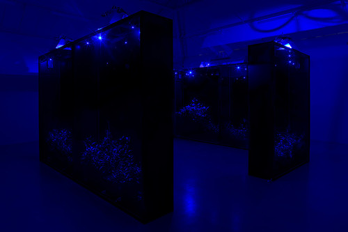 <i>Mesk-ellil</i>,       2014<br />      Installation, Ensemble of 7 stained glass terrariums, cestrum nocturnum, horticultural lightning, moonlight lightning, delay,        250 x 200 x 50 cm each, 250 x 500 x 500 cm overall<br />      Exhibition view Kamel Mennour, Paris, France, 2015