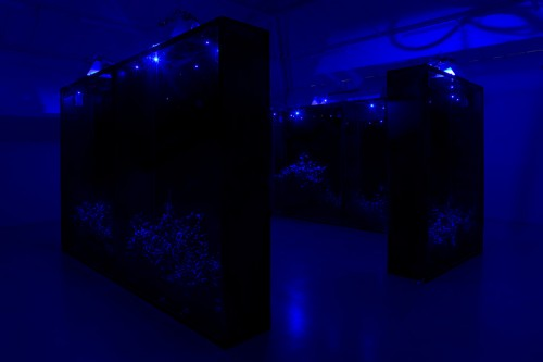 »Mesk-ellil«, 2014<br />Installation, Ensemble of 7 stained glass terrariums, cestrum nocturnum, horticultural lightning, moonlight lightning, delay, 250 x 200 x 50 cm each, 250 x 500 x 500 cm overall<br />Exhibition view Kamel Mennour, Paris, France, 2015