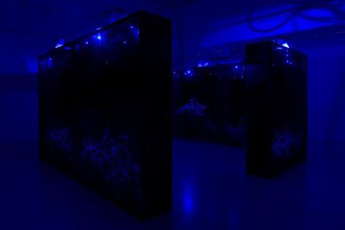 »Mesk-ellil«, 2014<br />Installation, Ensemble of 7 stained glass terrariums, cestrum nocturnum, horticultural lightning, moonlight lightning, delay, 250 x 200 x 50 cm each, 250 x 500 x 500 cm overall<br />Exhibition view Kamel Mennour, Paris, France, 2015
