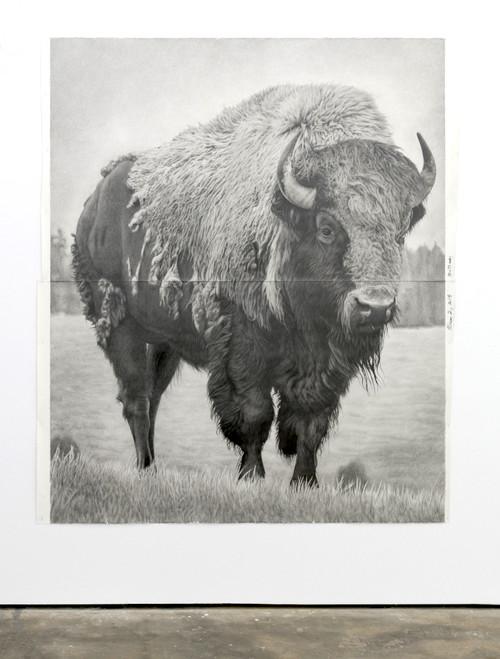 »Bison 2«,       2018<br />      pencil on paper,        228.6 x 185.42 cm<br />