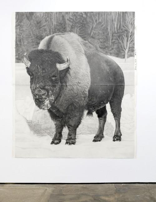 »Bison 1«,       2018<br />      pencil on paper,        228.6 x 185.42 cm<br />