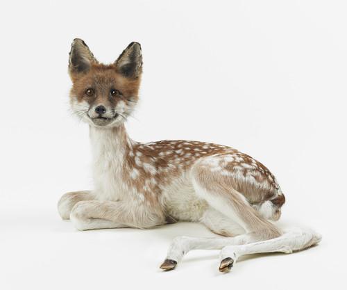 <i>misfit (fox / fawn)</i>,       2016<br />      taxidermy,        35 x 45 x 38 cm<br />