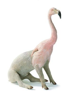 <i>misfit (flamingo /pig)</i>,       2005<br />      taxidermy,        75 x 75 x 30 cm<br />