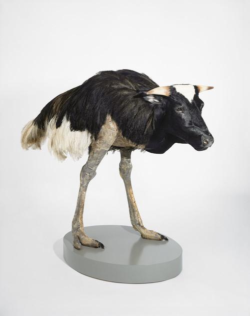 <i>misfit (cow/ ostrich)</i>,       1997<br />      taxidermy,        160 x 170 x 80 cm<br />
