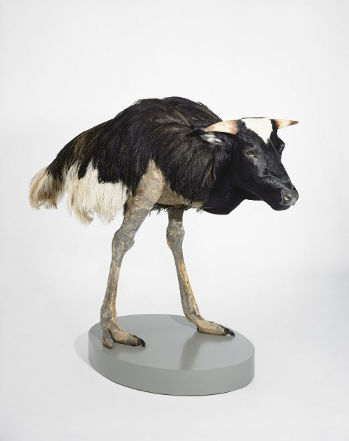 »misfit (cow/ ostrich)«, 1997<br />taxidermy, 160 x 170 x 80 cm<br />