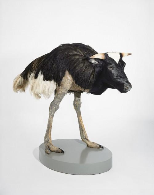 »misfit (cow/ ostrich)«, 1997<br />taxidermy, 160 x 170 x 80 cm<br />