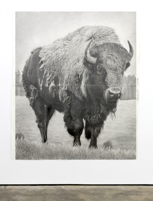 <i>Bison 2</i>, 2018<br />pencil on paper, 228 .6 x 185.42 cm<br />