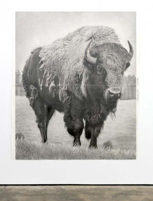 »Bison 2«, 2018<br />pencil on paper, 228 .6 x 185.42 cm<br />