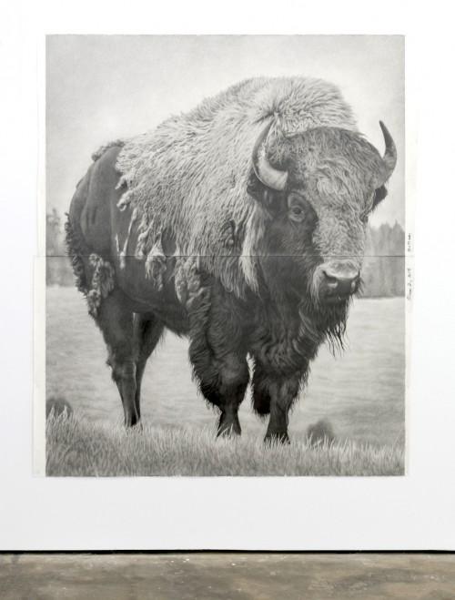 »Bison 2«, 2018<br />pencil on paper, 228 .6 x 185.42 cm<br />