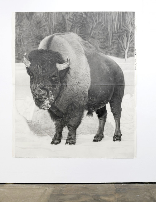 <i>Bison 1</i>, 2018<br />pencil on paper, 228.6 x 185.42 cm<br />