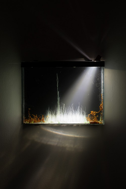 »Tranche, présage«, 2014<br />chemical evolution slowed landscapes in glass tank, 37 x 28 x 5 cm<br />