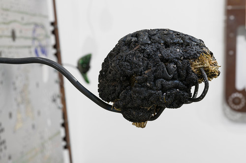 »Brain (soil sample / hay)«, 2018<br />hay, soil, resin, 13 x 13 x 15.5 cm<br />